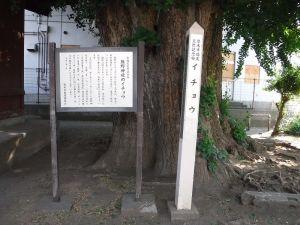 Ichou00